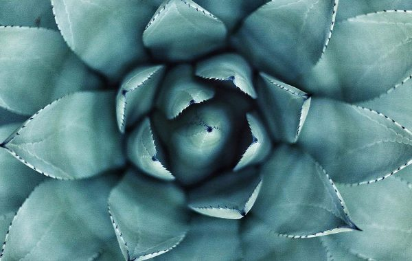 A macro view of a succulent plant