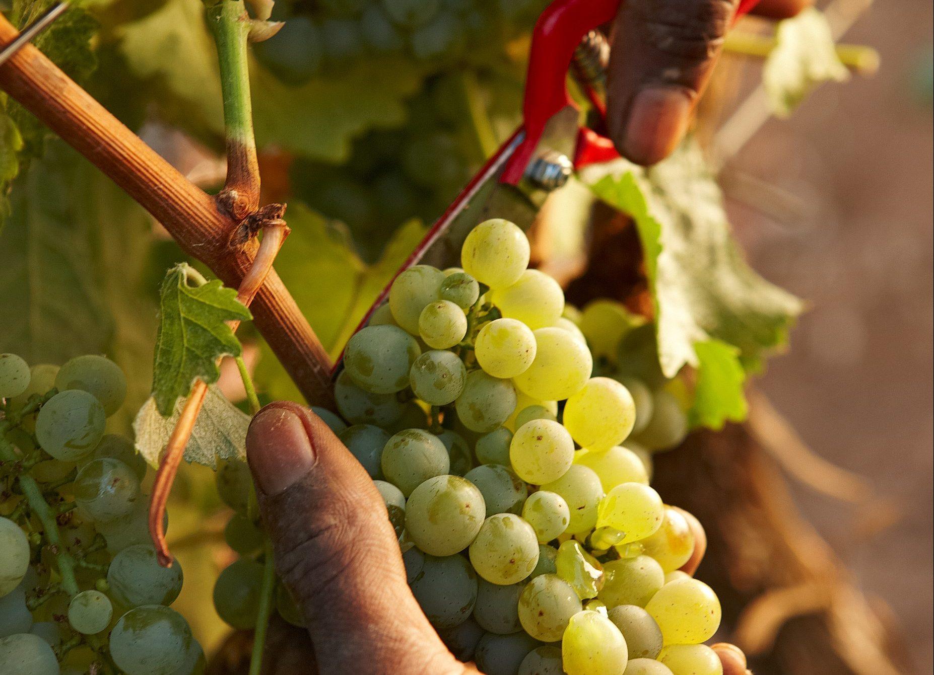 Delaire Graff Estate winemaker and viticulturist